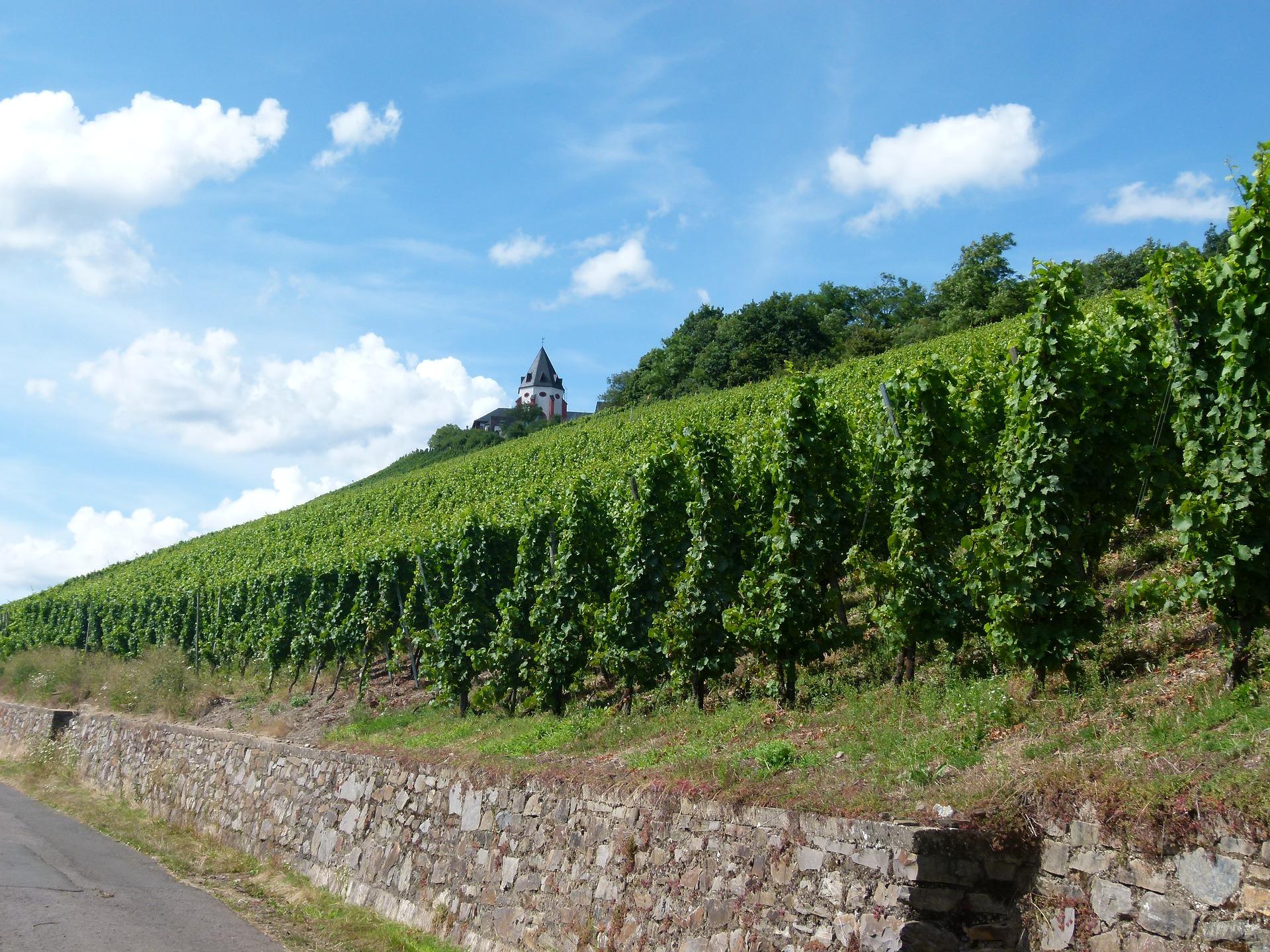 Marienburg Moezel
