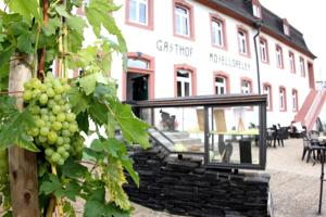 Gasthaus Moselloreley Piesport Moezel