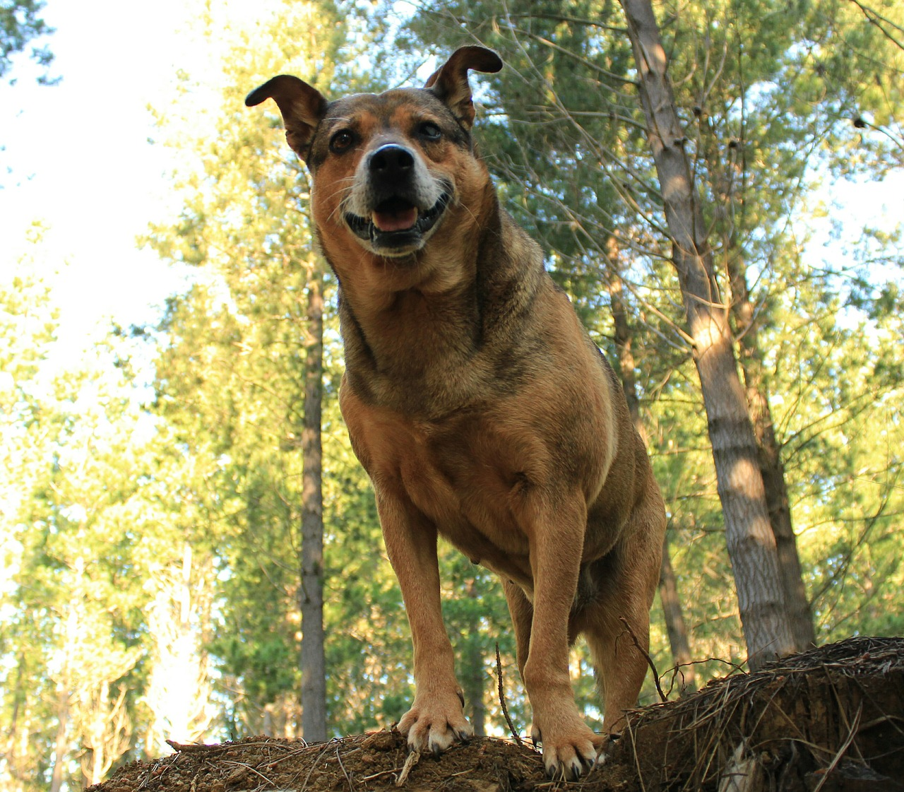 Hond Vakantie Moezel