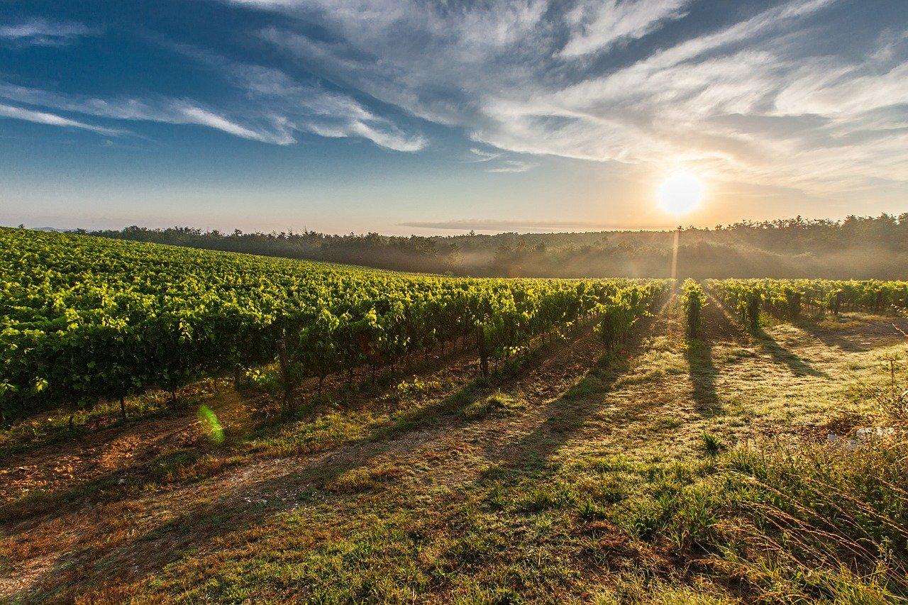 Moezel wijnveld zonsondergang